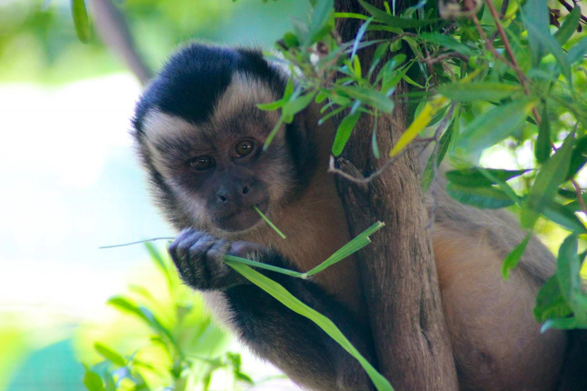 Long-Term Primate Carer