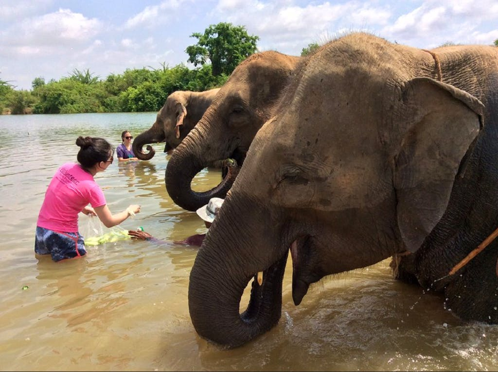 Elephant Community Refuge