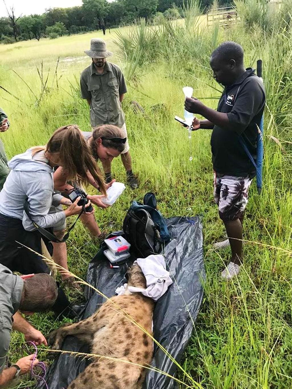 Wildlife Tracking & Field Research
