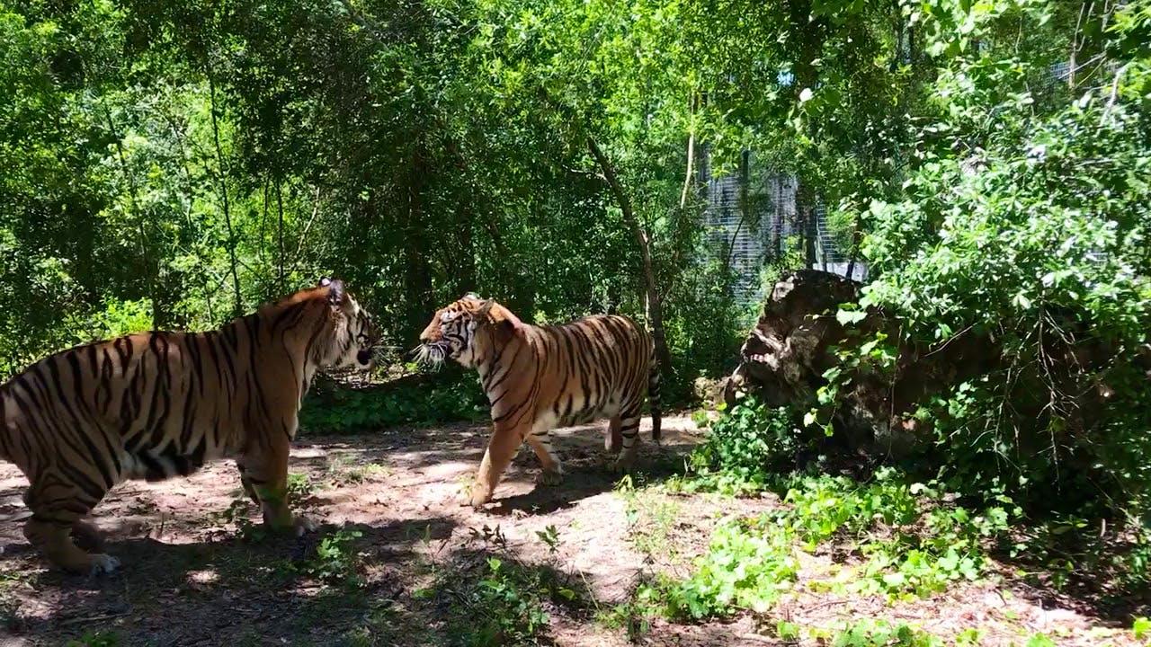 Exotic Wildlife Sanctuary Rehabilitator