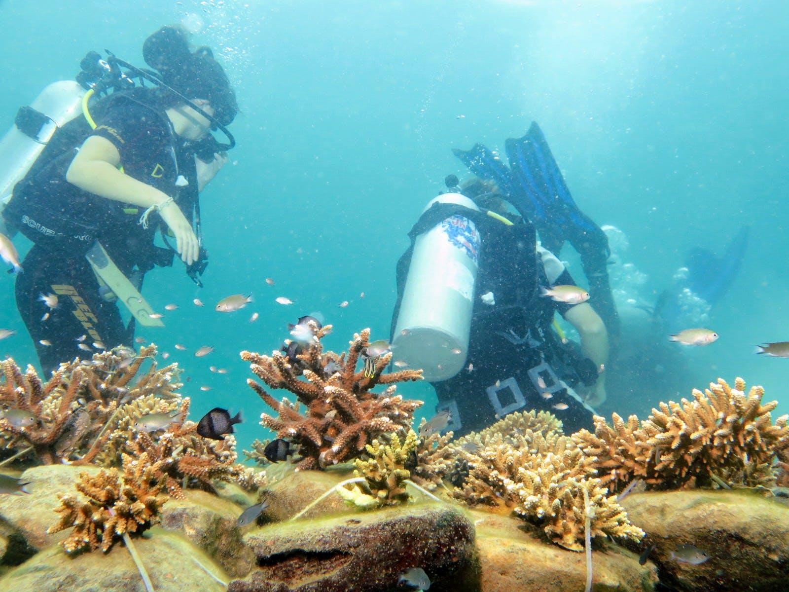 Coral Farming Assistant