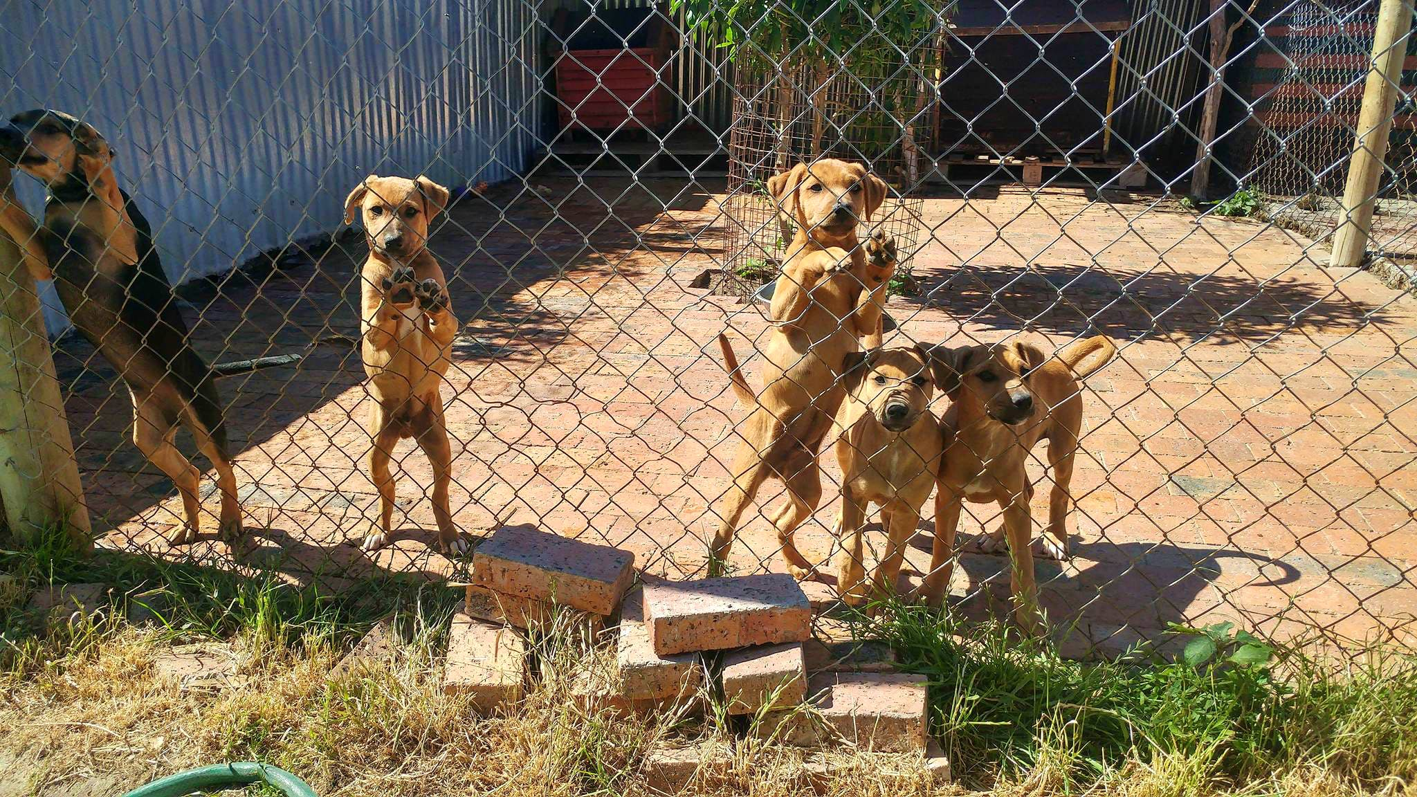 Domestic Animal Rescue & Rehabilitation