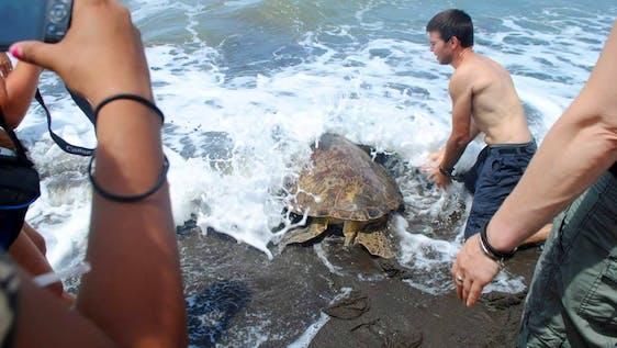 Sea Turtle Conservation Ambassador