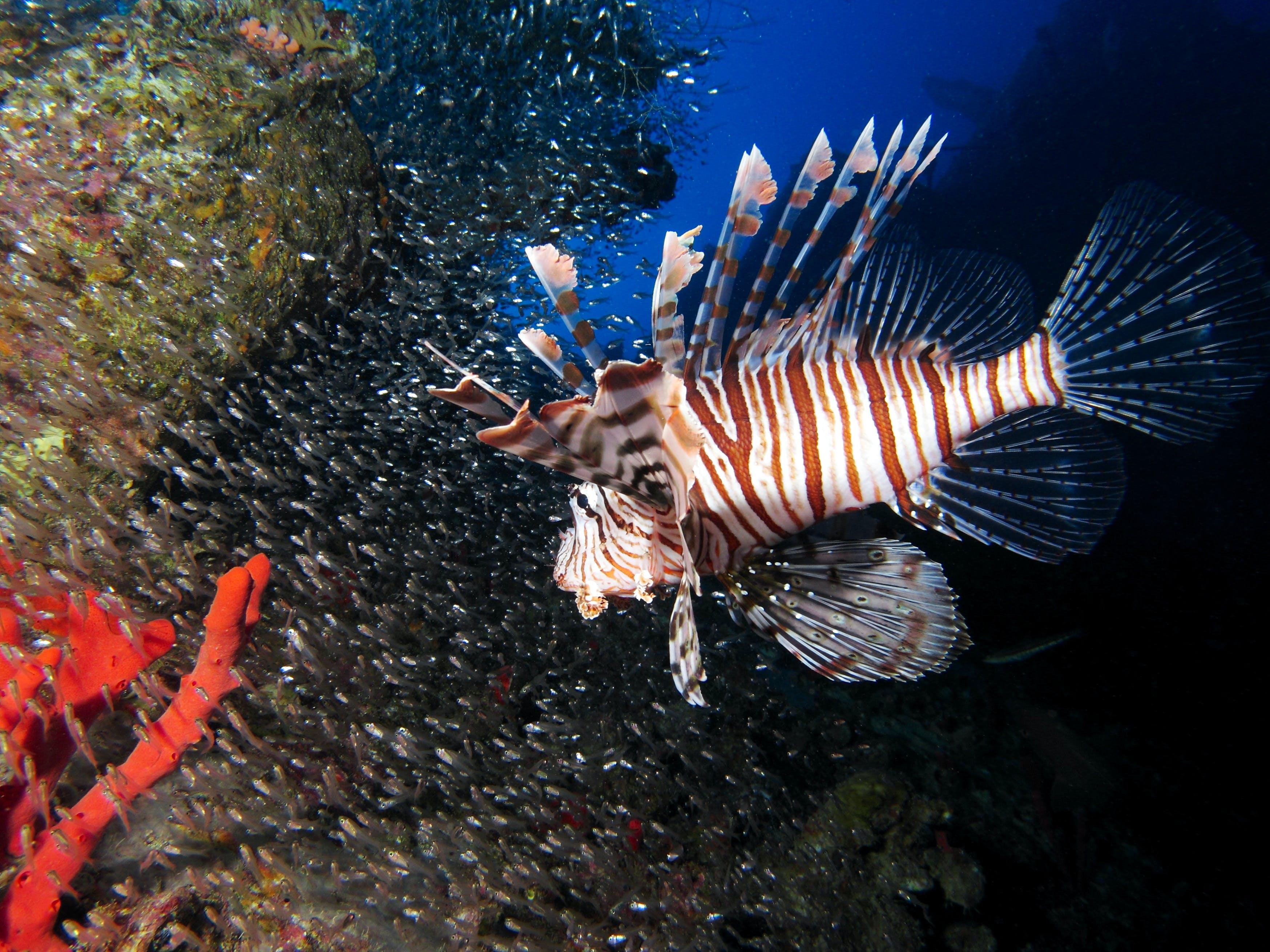 Diving & Marine Conservation Internship
