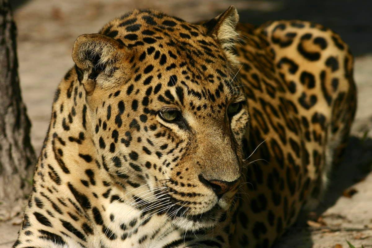 Wild & Exotic Animal Caretaker