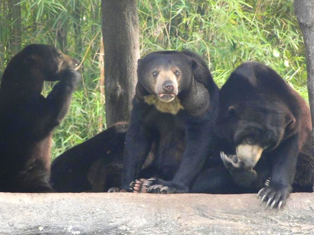 Thai Resident Bear Care