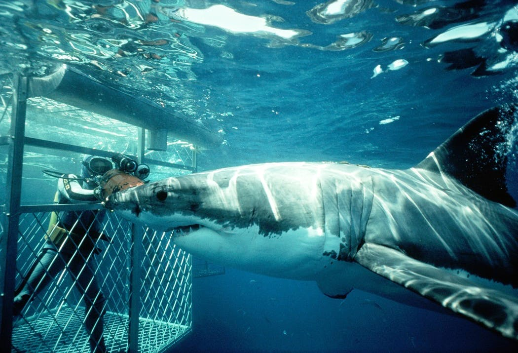 Shark Conservation & Research Assistant