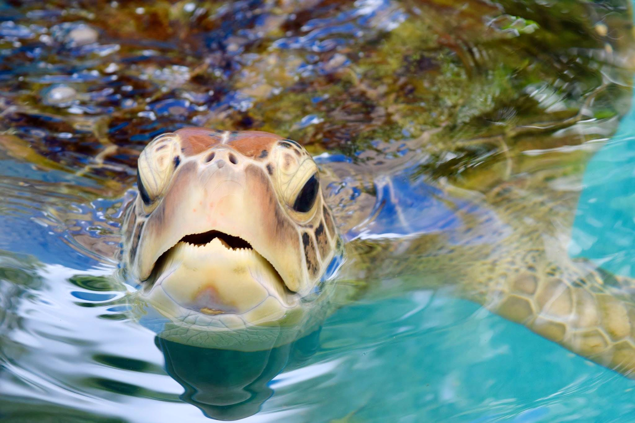 Great Barrier Reef Turtle Rehabilitation
