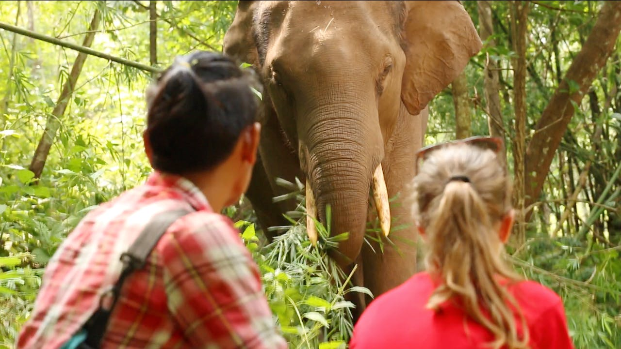Volunteer with Elephants and Teach English