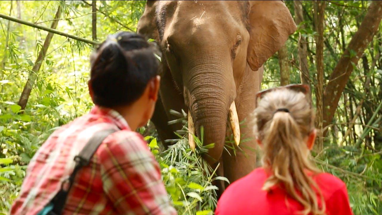 Volunteer with Elephants and Teach English