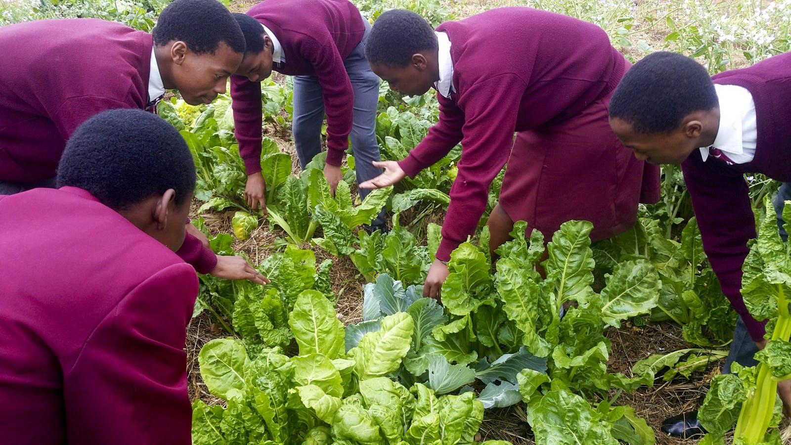 Rainwater Harvesting & Food Security