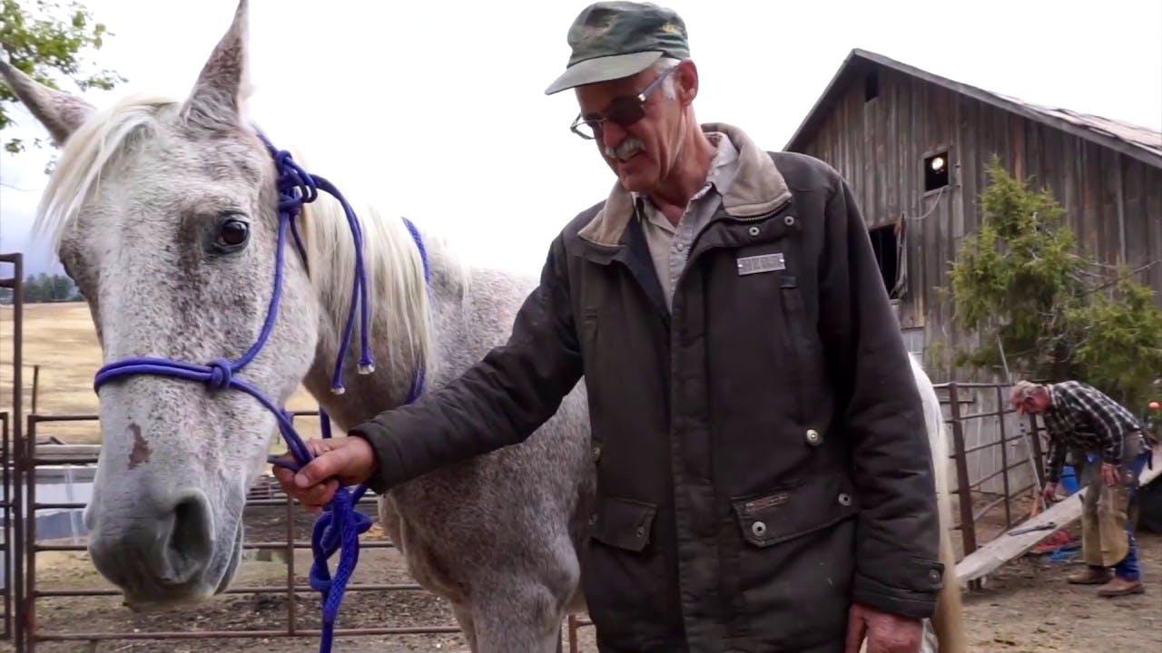 Horse Rescue Ranch Caretaker