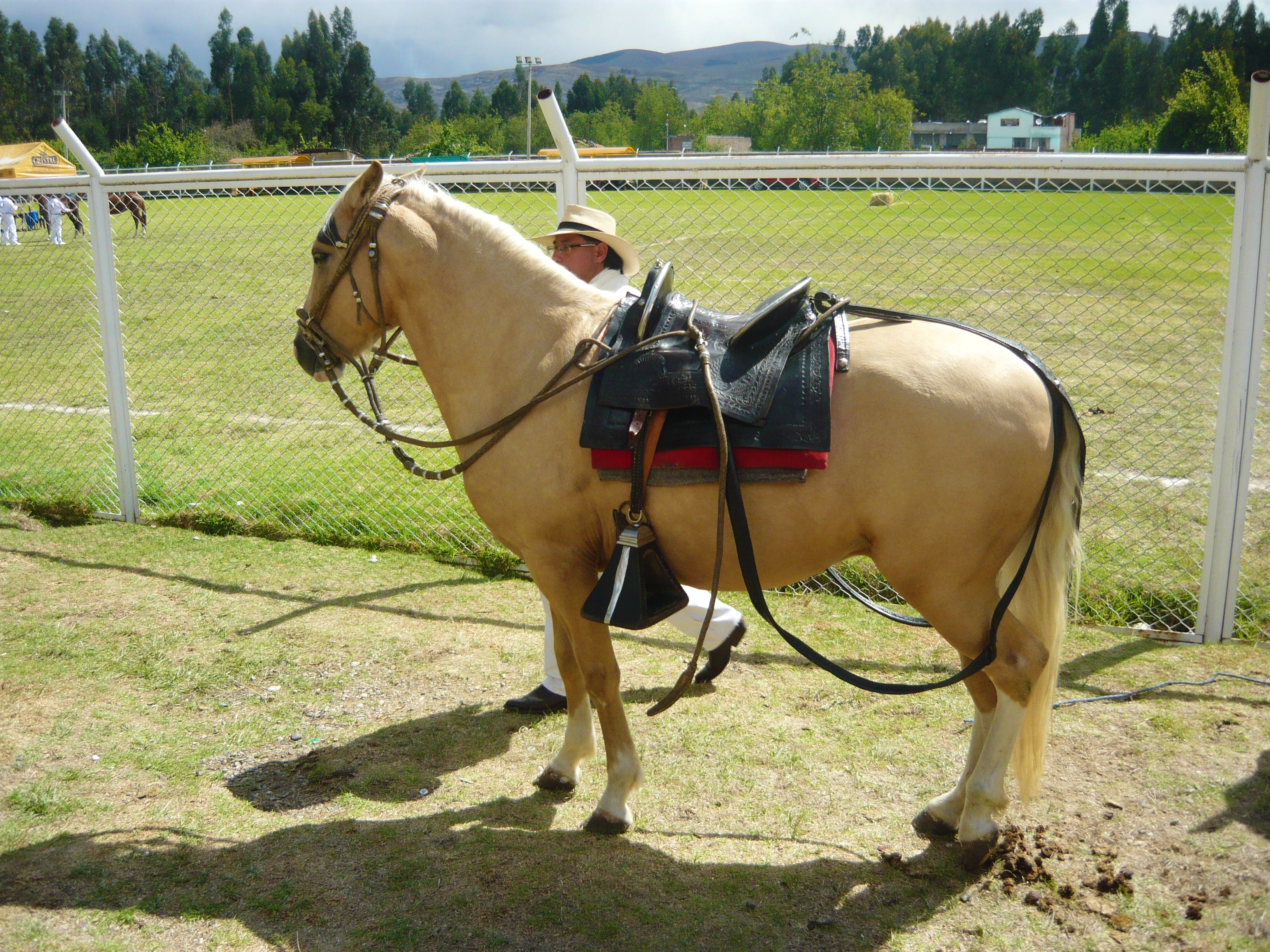 Horse-Training in Mantaro-Valley!