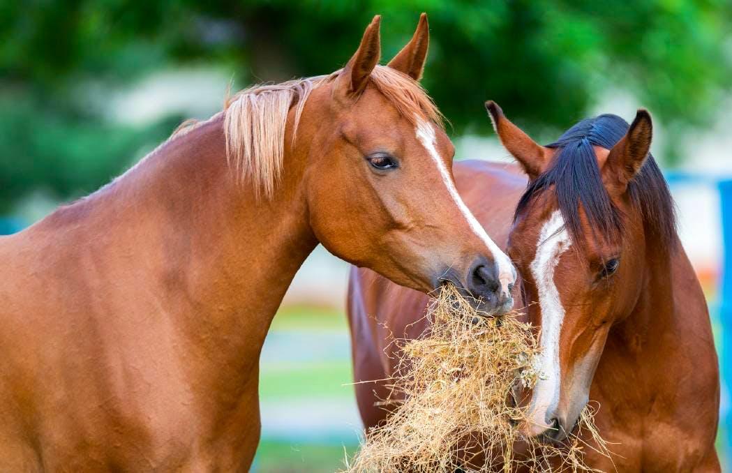 Horse Handler and Rehabilitator