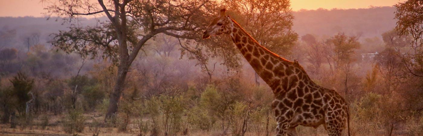 Wildlife Protection Victoria Falls