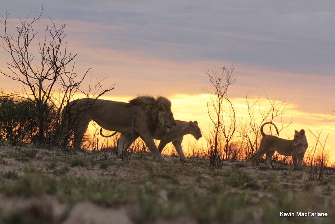 Wildlife Rehabilitation & Monitoring Supporter