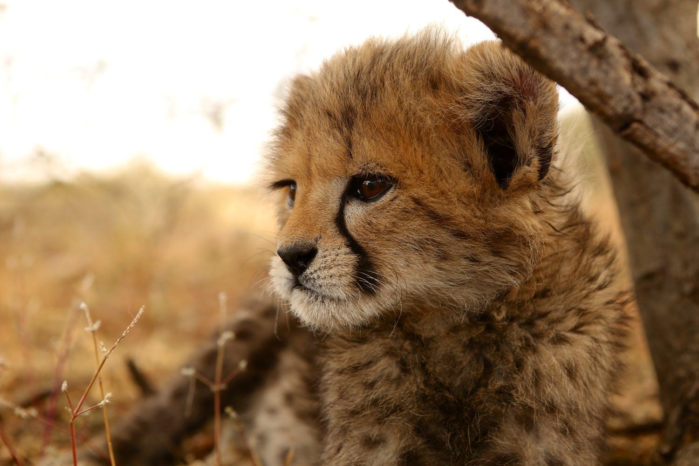 Wildlife Sanctuary Caretaker