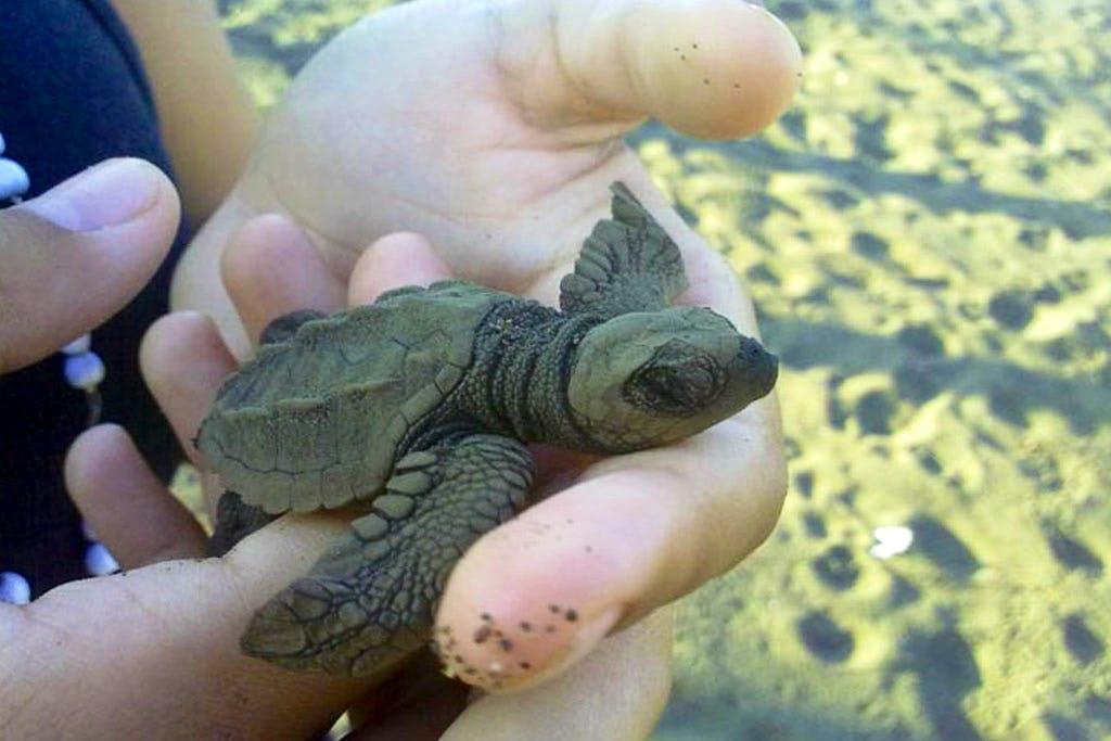 Help Save Sea Turtles