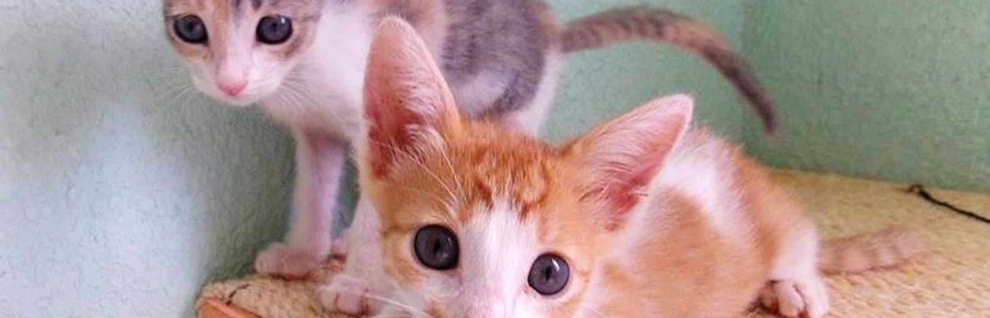 Kitten Rescue & Rehoming Supporter