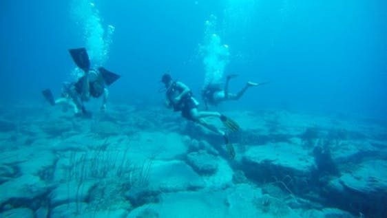Diving and Marine Conservation