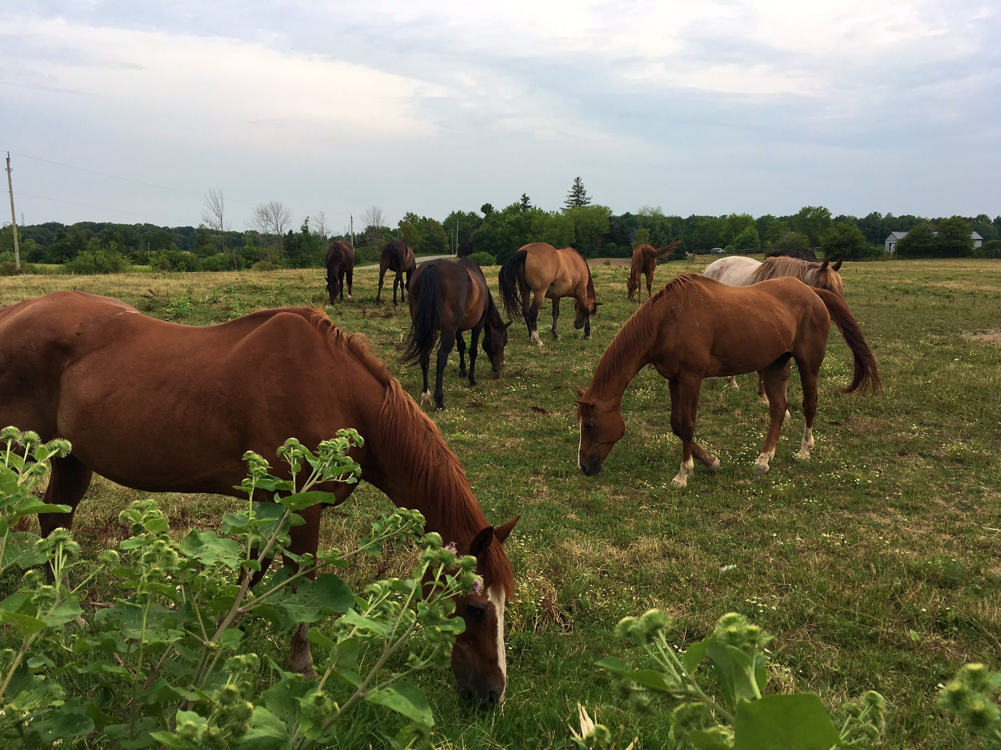 Horse Caretaker & Food Bank Assistant