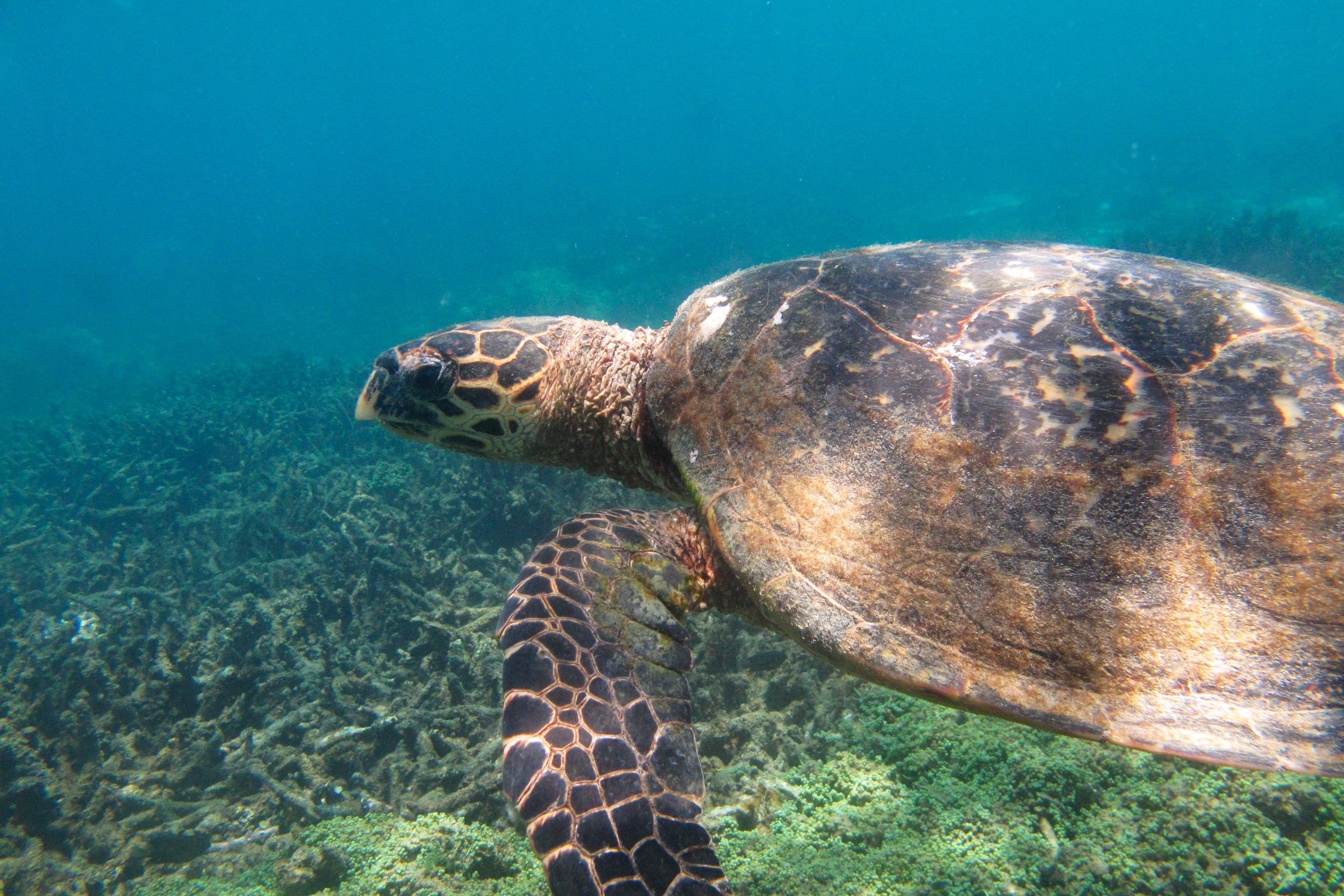Sea Turtle Conservation Monitor