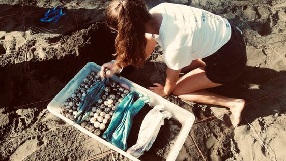 Sea Turtle Conservation & environmental protection