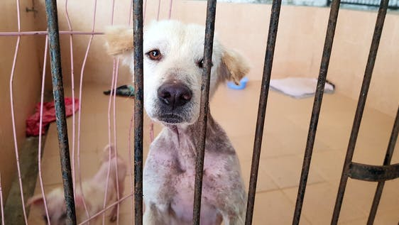 Stray Dog Shelter and Rehabilitation