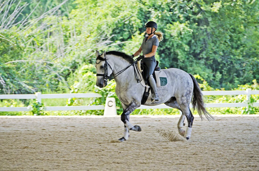 Horse riding school & Rehab Assistant