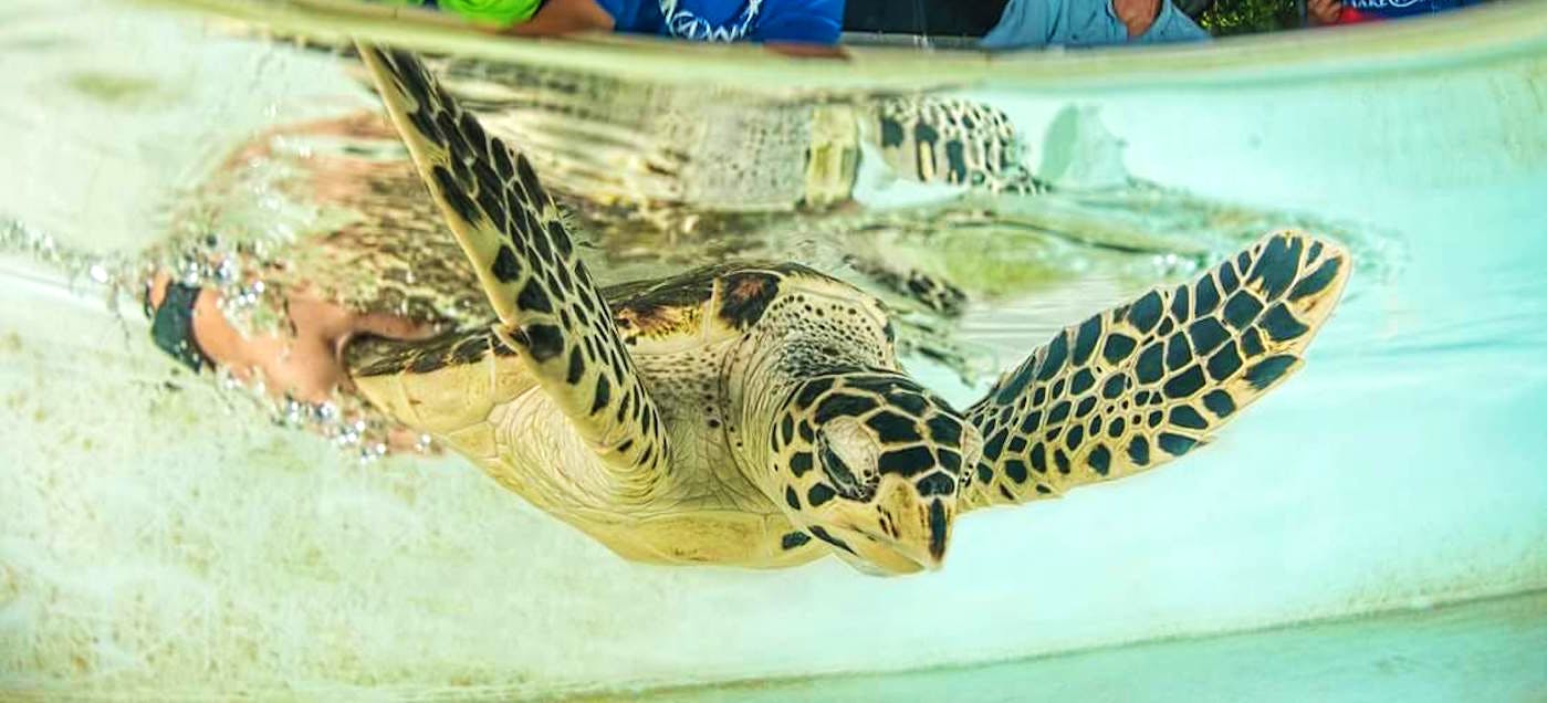 Coastal Sea Turtle Conservation