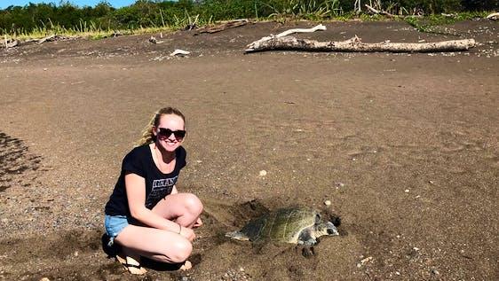 Sea Turtles Conservation