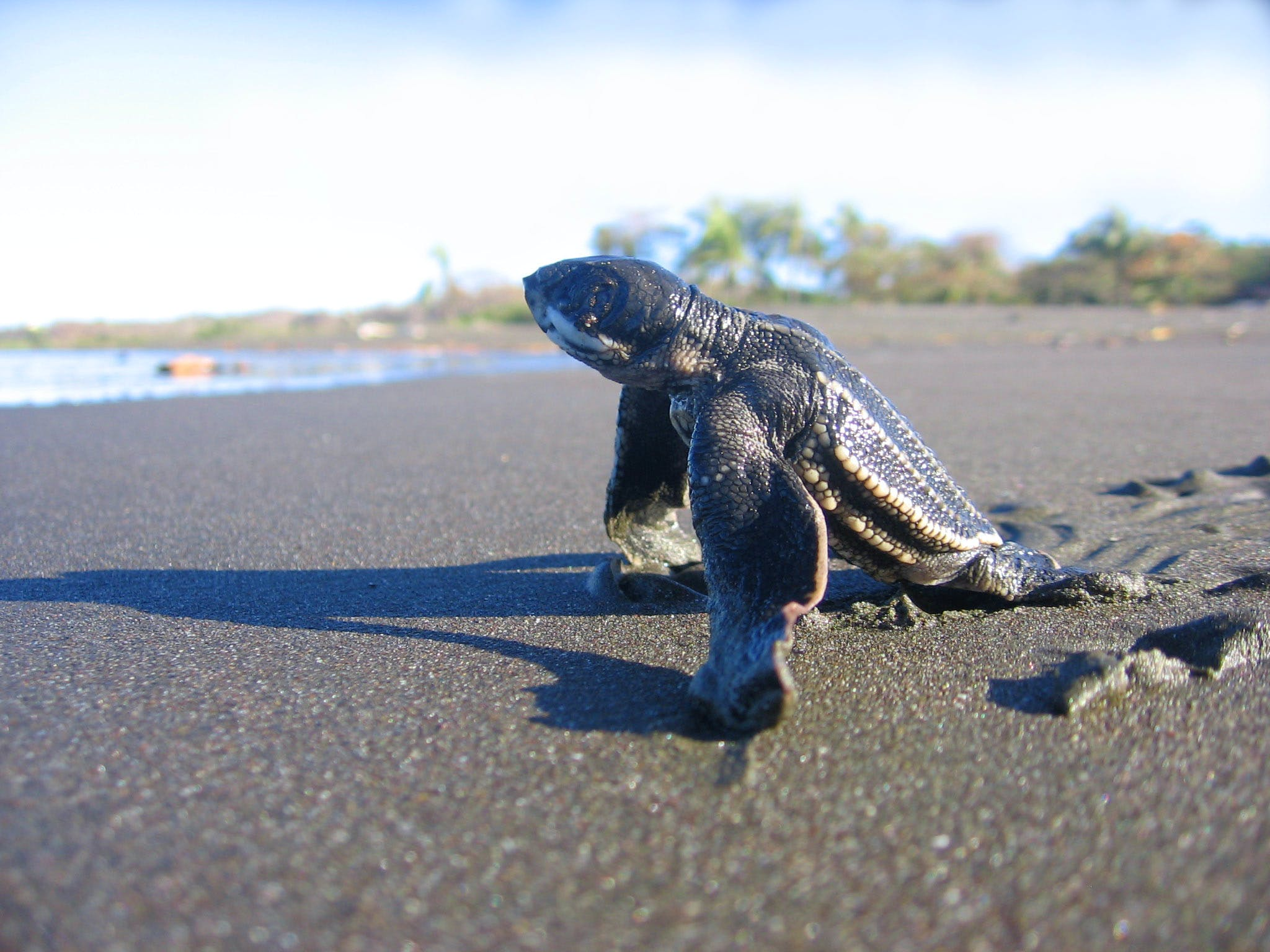 Sea Turtles Conservation Experience