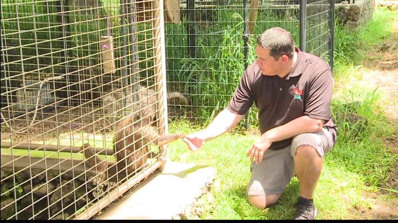 Exotic Wildlife Caretaker Assistant