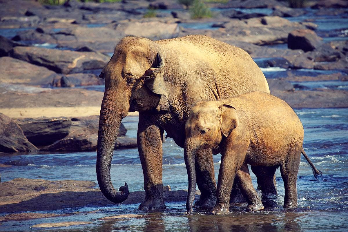 Elephant Conservation