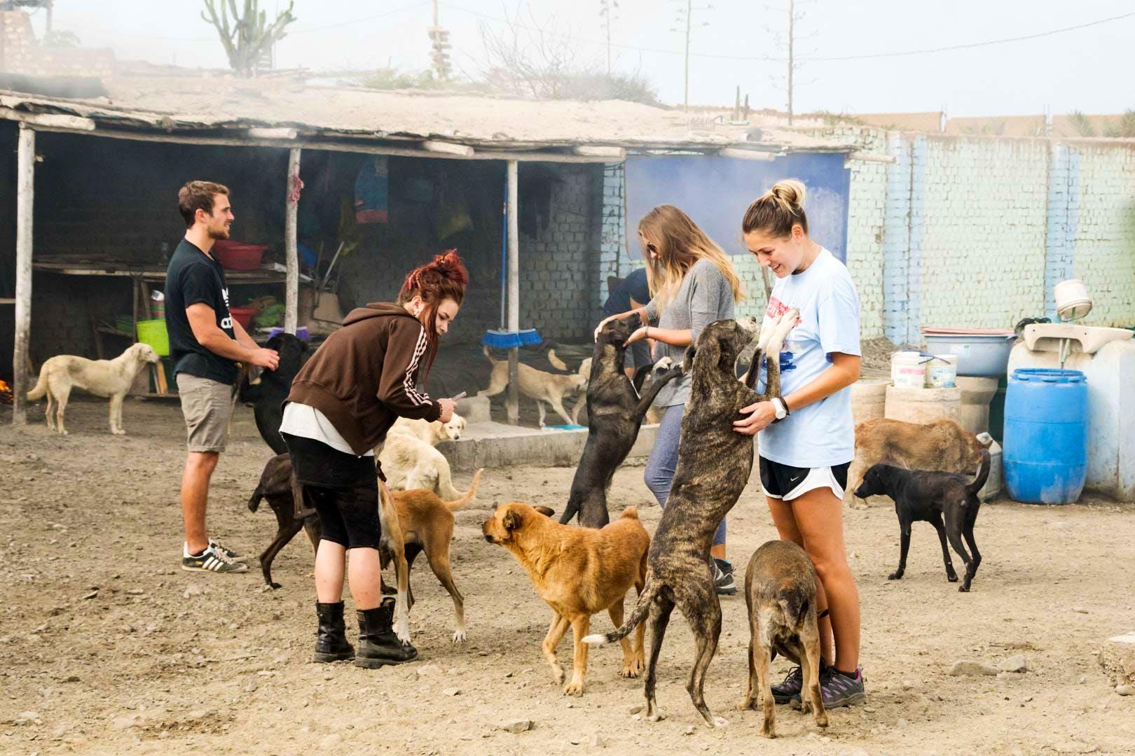 Helper in Dog Shelter