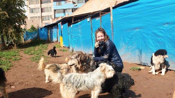 Dog Shelter Caretaker