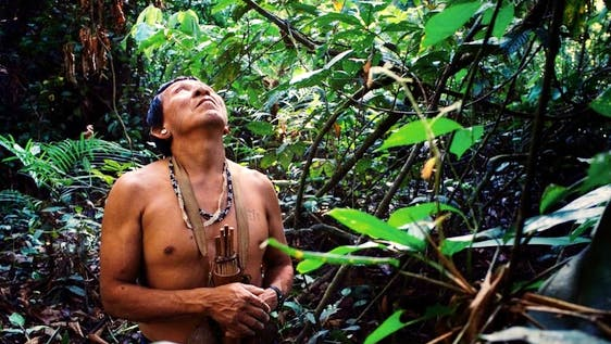 Amazon Rain Forest Conservation