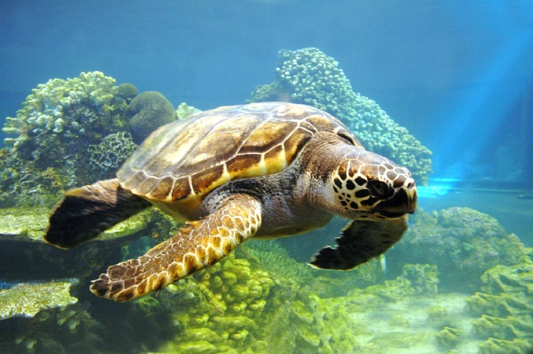 Island Turtle Conservation researcher