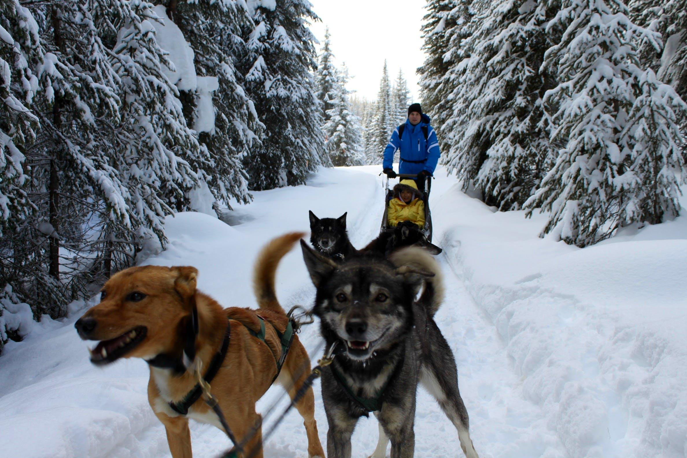 Huskies Caretaker & Dog Sled Assistant