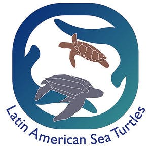 Latin American Sea Turtles